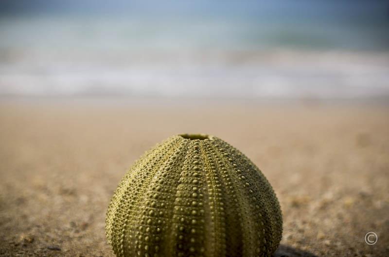 Nature Patterns: Sea Urchin