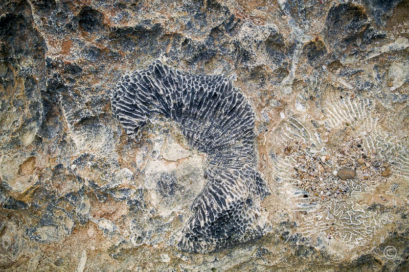 Nature Patterns: Solidified Coral Patterns