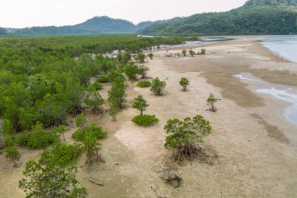Iriomote Jima mangrove forest