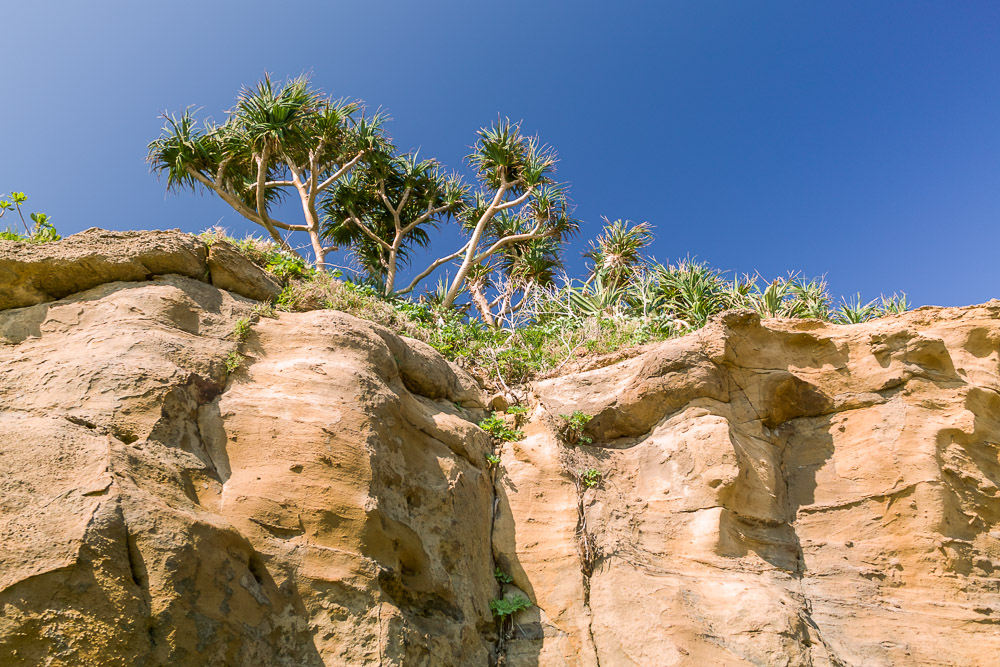 Iriomote cliff