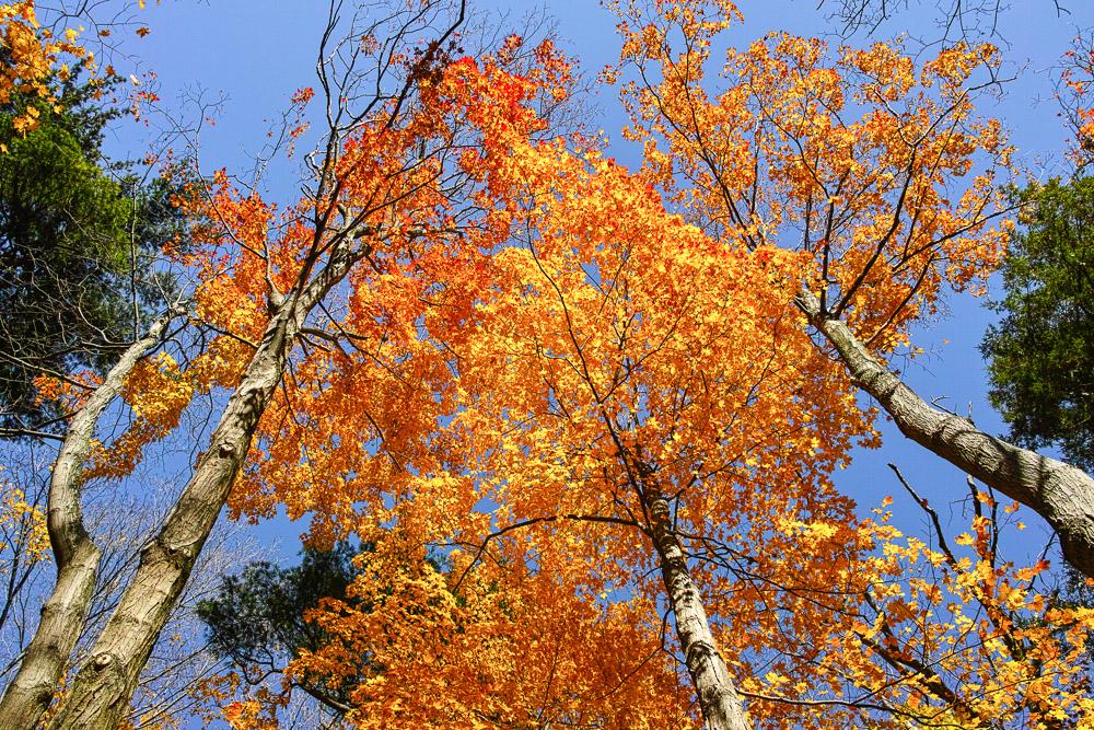 Canada fall photos