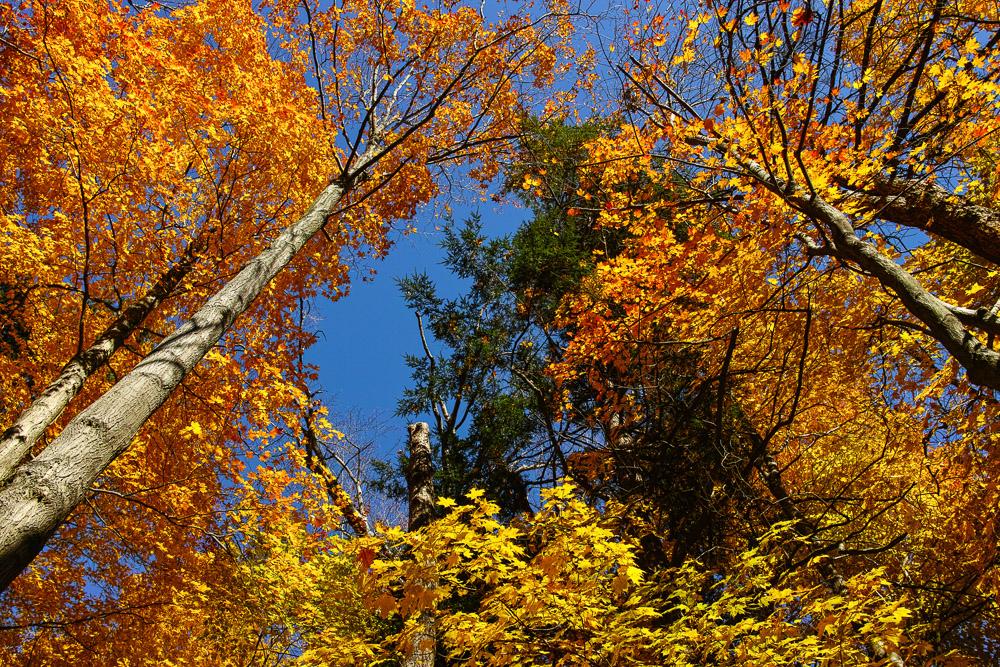 Canada fall colours
