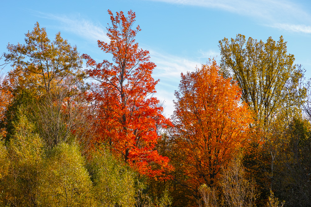 Red and orange foliage