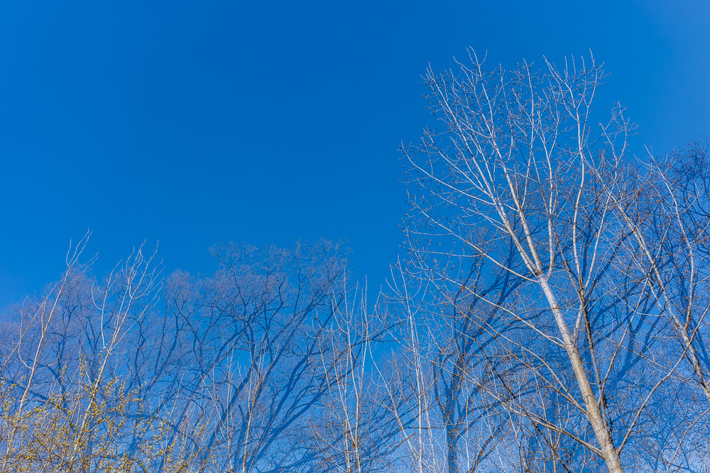 Blue sky and branches