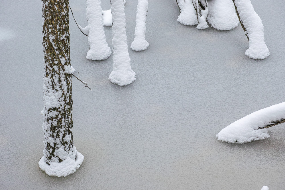 Trunks in frozen lake
